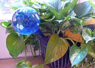 Шар для полива растений Smile WS-104Полезные вещи для дома<br><br>