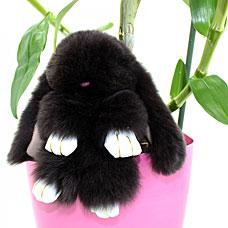 Брелок Меховой Кролик 19 см черный 11042Сувениры<br><br>