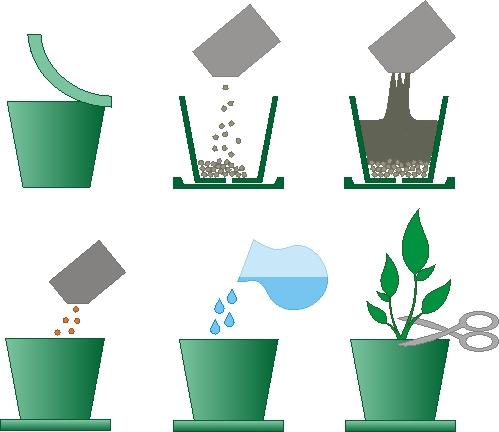 Растение BontiLand Зелень круглый год 412293 Душица, Шалфей, Мелисса